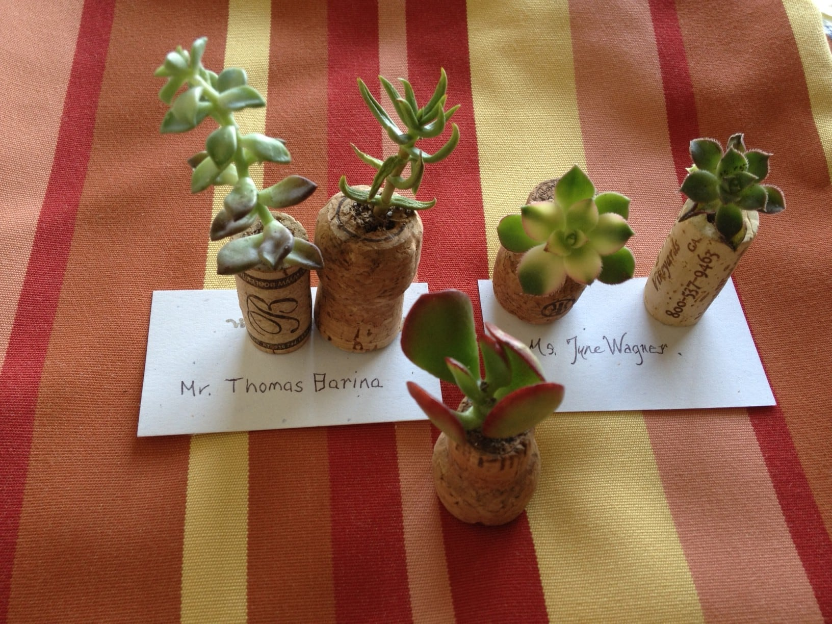 wine and champagne cork succulent favors for wedding tables