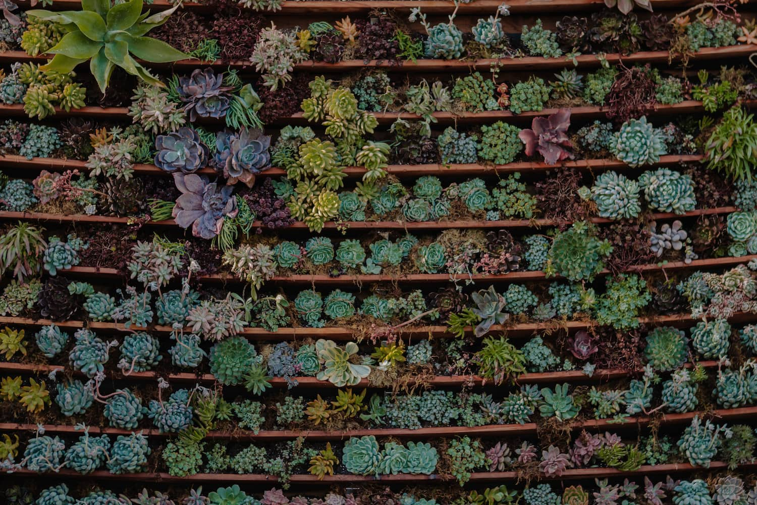 succulent wall, wedding backdrop