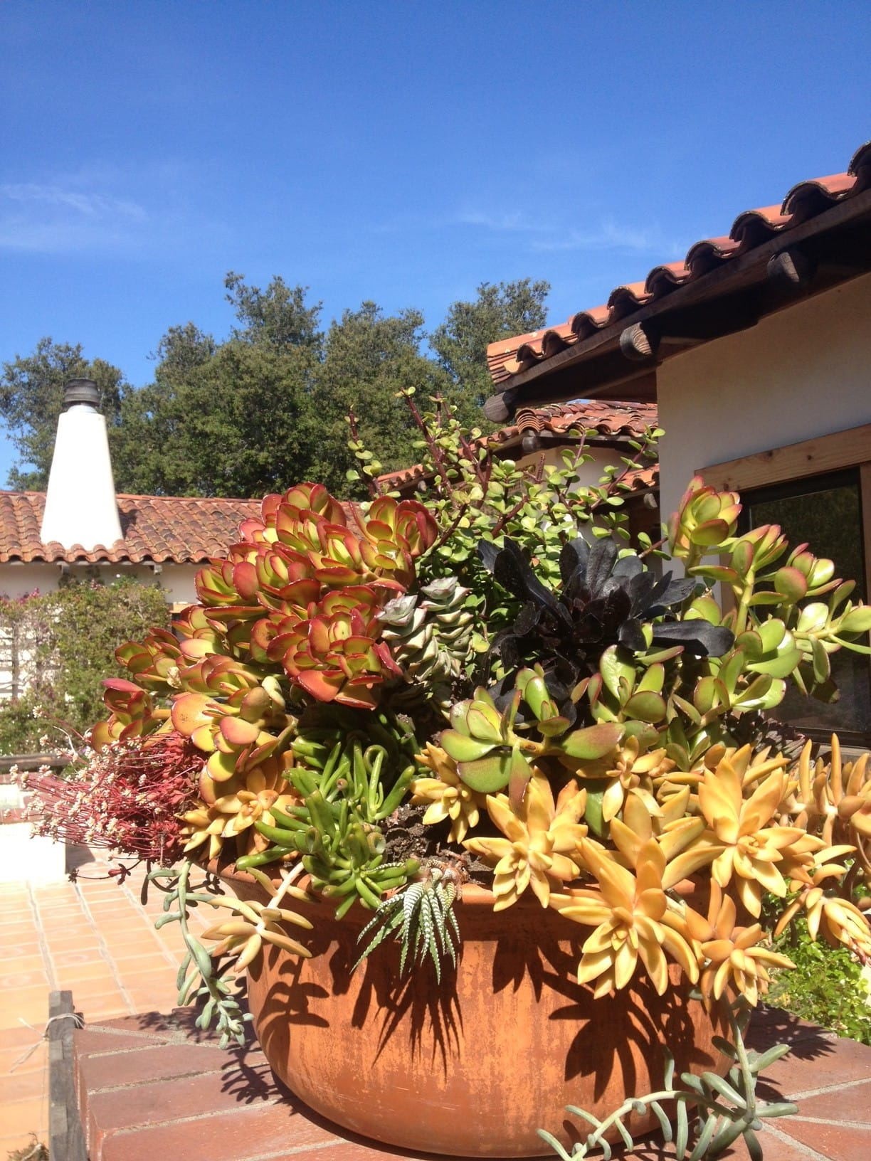 Front Courtyard of The Casitas Estate has luscious and colorful succulent containers