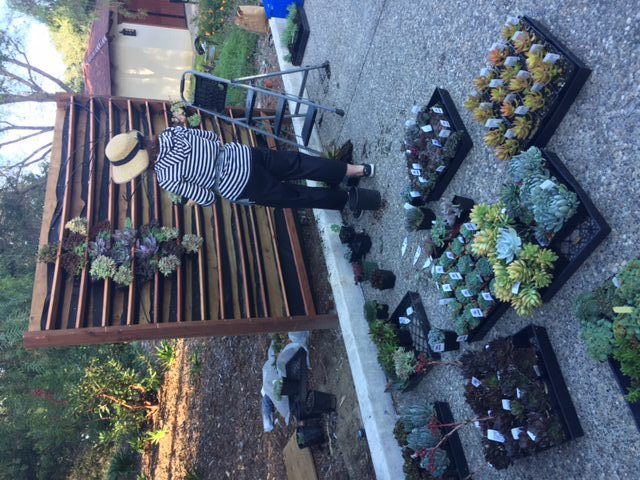 My good friend Laura Greaves of Viva La Succulents stopped in to impart wisdom!